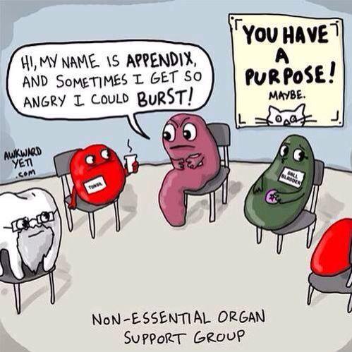 terapiagrupo-organos